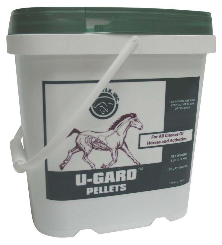 Идеи по уходу за лошадьми. Содержание лошадей. | HorsesHub| уход за лошадьми| уход за лошадью|питание лошади| уход за лошадьми в домашних условиях| уход за лошадью для начинающих| лошади уход за ними| как содержать лошадь| уход за жеребенком