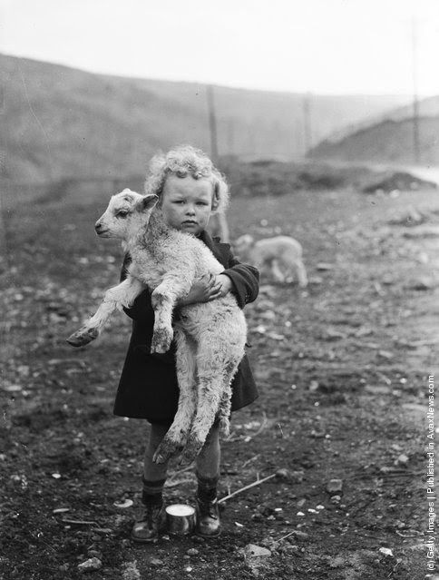 vintage everyday: Interesting Vintage Photos of Baby Animals