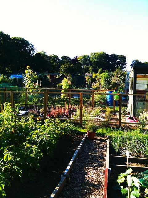 Allotment. Edinburgh, Scotland