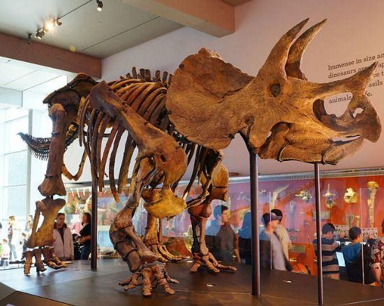 Sugarland Natural History Museum