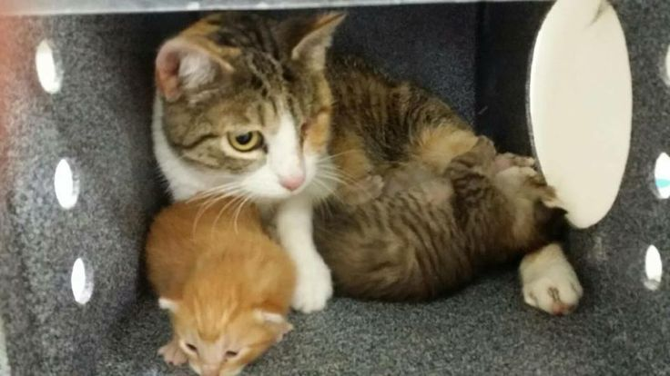 Fort Worth Animal Shelter Cats
