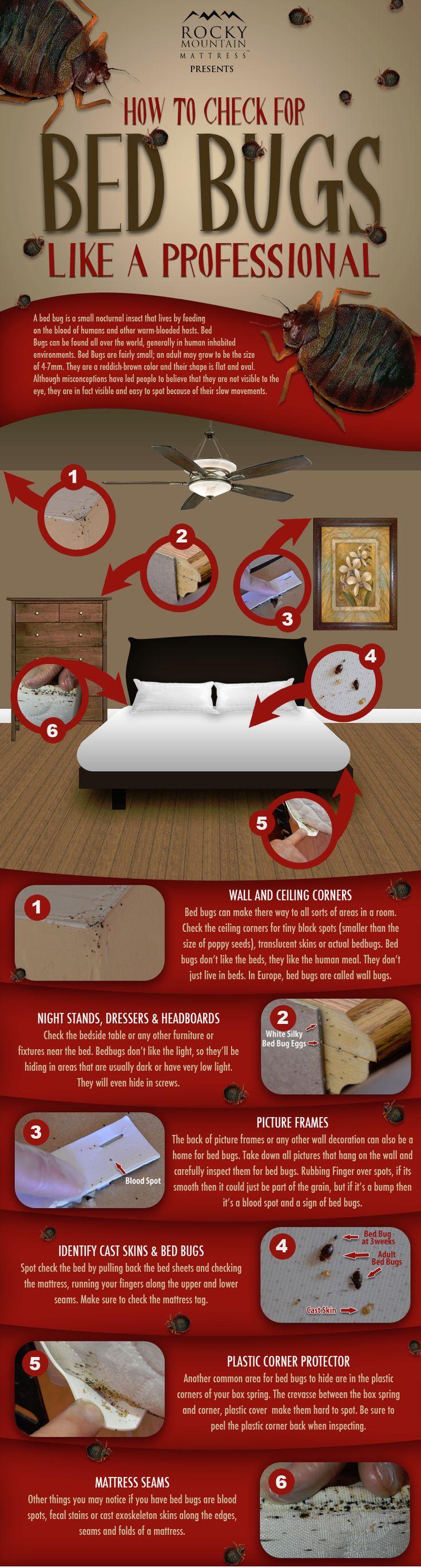 How to check for bed bugs like a boss. Seriously, everyone should look at this.