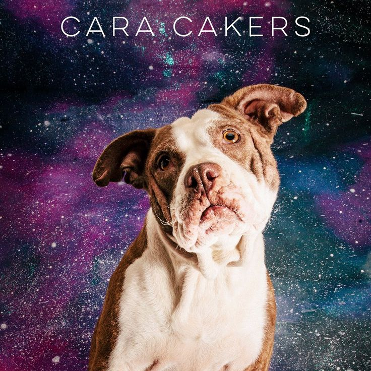 """05/01/17-HOUSTON-""""I'm a laid back grannydog who was found in a trash pile. See BEFORE photos below. I have no teeth..so let's eat ice cream together just you & me!!""""    Cara Cakers is available for adoption through A Chance to Bloom. Contact Jessica tagged on this post for more information or to fill out an adoption application."""