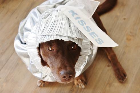 Costume Halloween chien argent