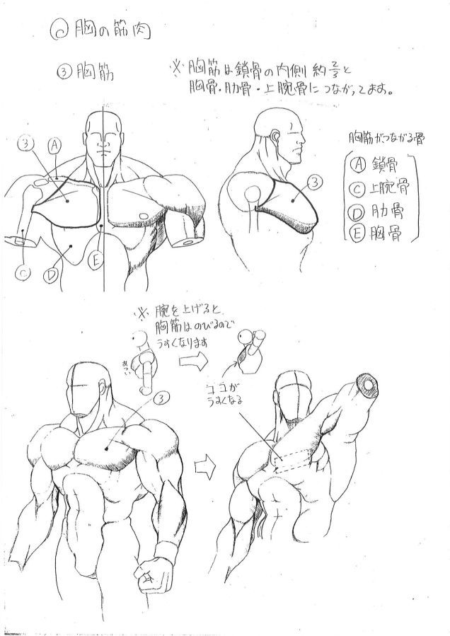 Capcoms Human Anatomical Reference For Artists Arts Pinterest