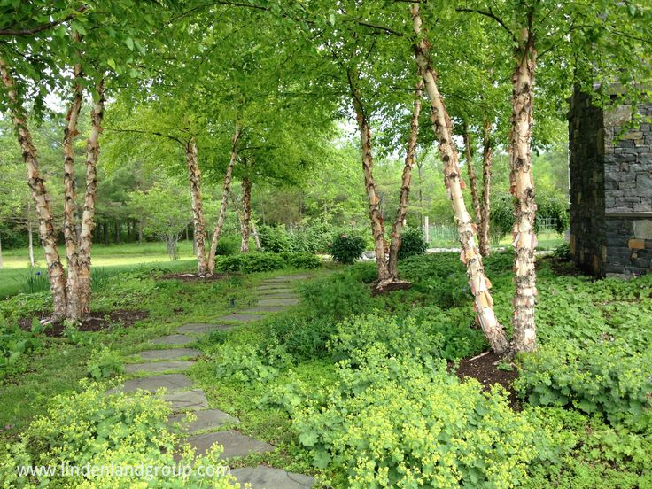 Driveway Landscaping Entrance Plants