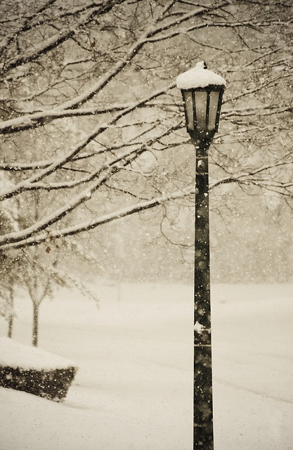 Snow snow snow. I love anywhere with snow.Winter Snow, Lamps Post, Beautiful, Winter Wonderland, White Christmas, Chronicles Of Narnia, Winter Is Come, Street Lights