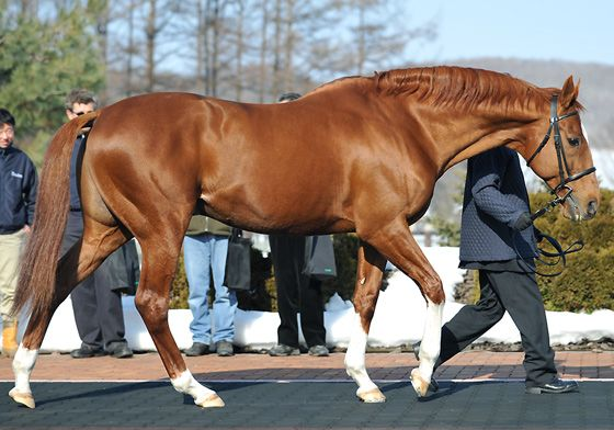 Charismatic....three strides short of being a TC winner in 1999.  Now at stud in Japan and as beautiful as ever. still one of my favorite race horses of all time. love this guy