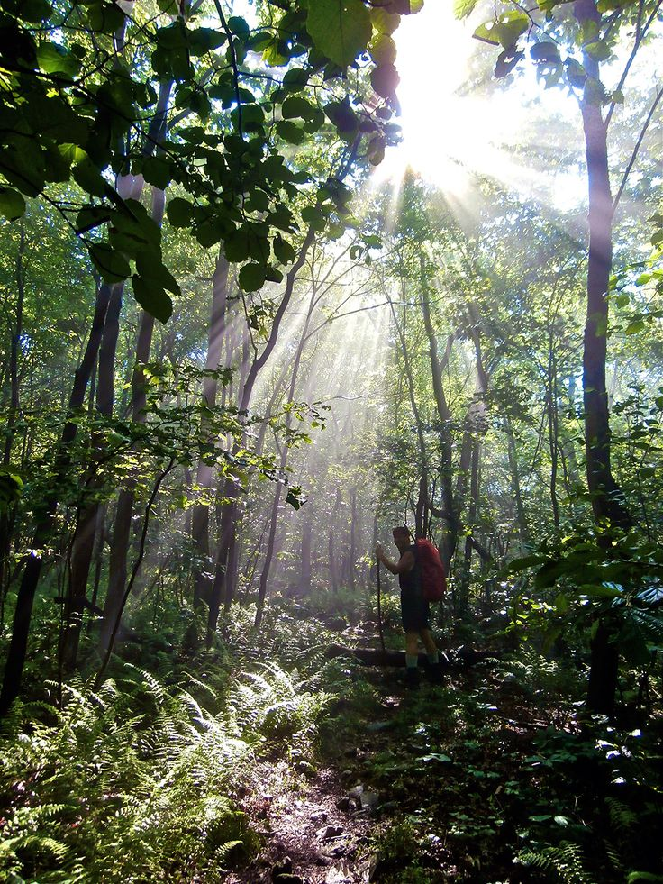 Stand Up That Mountain The Battle to Save One Small Community in the Wilderness Along the Appalachian Trail