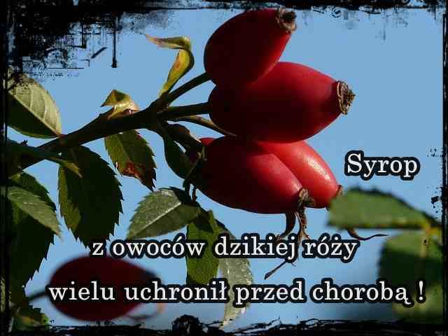 syrop z owoców dzikiej róży