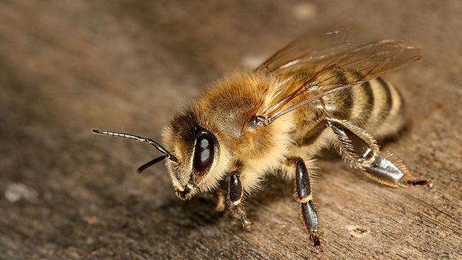 Here\u0027s how to tell a carpenter bee from a blueberry bee from a wasp.