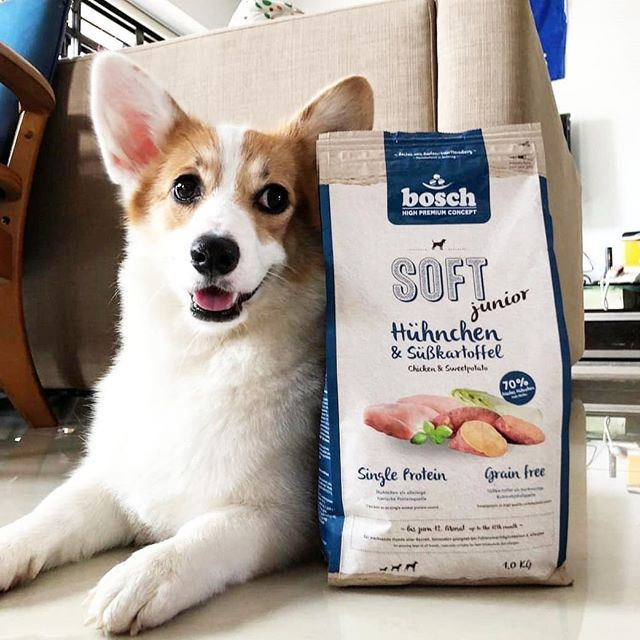 Does Your Dog Have Sensitive Skin Bosch Soft And Plus Dry Dog