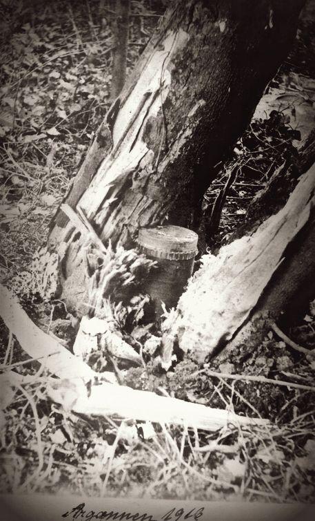 WWI, Argonne 1916, Grenade stuck in a tree.