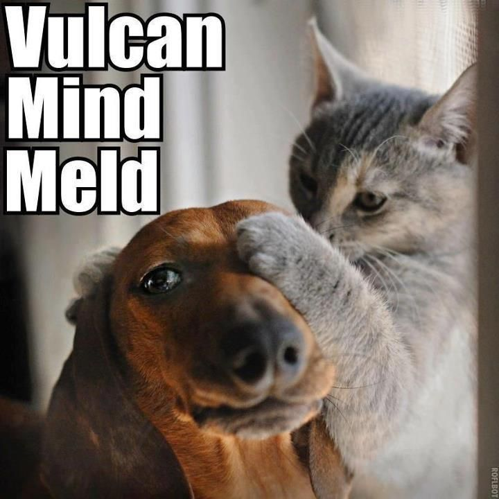 My mind to your...squirrel?: Cats, Animals, Dogs, Dachshund, Pet, Vulcan Mind, Funny Animal, Star Trek