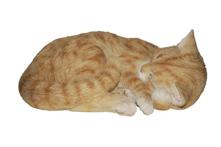 Vivid Arts zenzero gatto addormentato, formato B: Amazon.it: Giardino e giardinaggio
