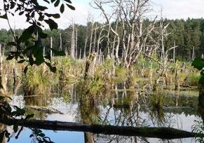 Müritz-Nationalpark: Wandern im Naturparadies