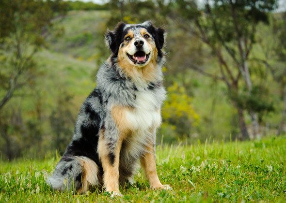 Most Popular Dog Names for Large Dog Breeds