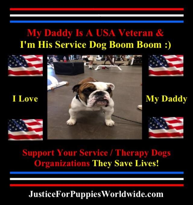 Pin By Justice For Puppies Worldwide Jfpw On Home Page For
