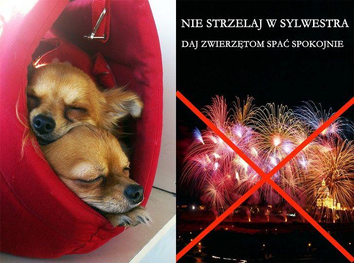 Krakowskie Towarzystwo Opieki Nad Zwierzętami - Apele