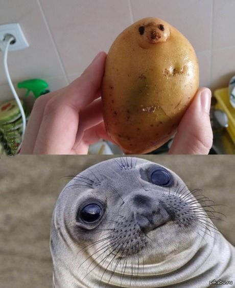 25 Best Ideas About Seals On Pinterest Baby Seal Sea
