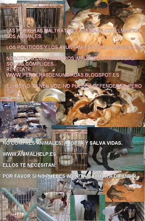 http://no-a-la-venta-de-animales.blogspot.com.es/    DONT BUY ANIMALS, ADOPT  WWW.PETA.ORG