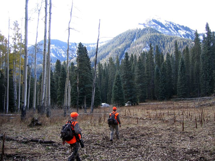 5 Tips for a Colorado Elk Hunt
