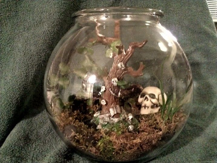 Halloween Skull Terrarium | Inside the Glass Terrariums ...