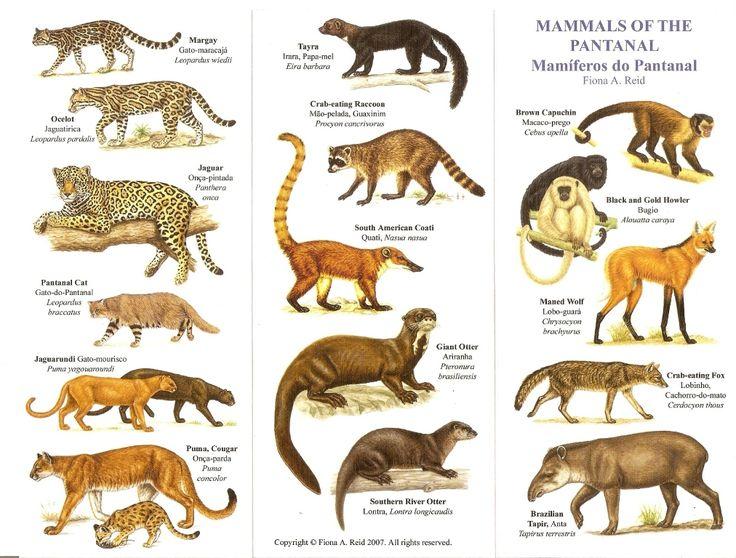 Mammals of the Pantana...