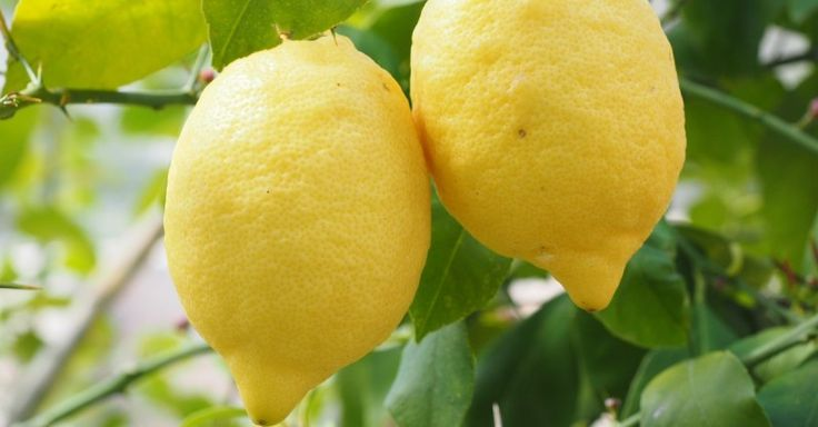 Ze legt wat schijfjes van een citroen in haar slaapkamer. Klinkt misschien vreemd maar het is voor DEZE reden! - Pagina 2 van 2 - Zelfmaak ideetjes