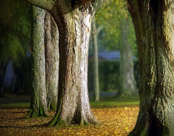 Autumn Trees....afternoon light