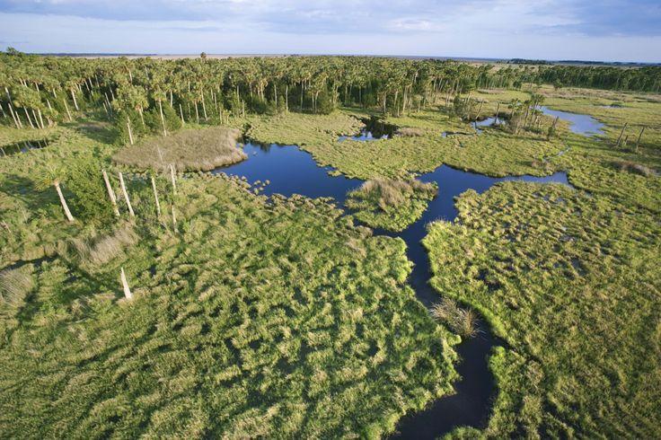 Unberührte Natur in den Everglades