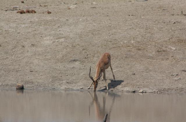 Kruger National Park 2009