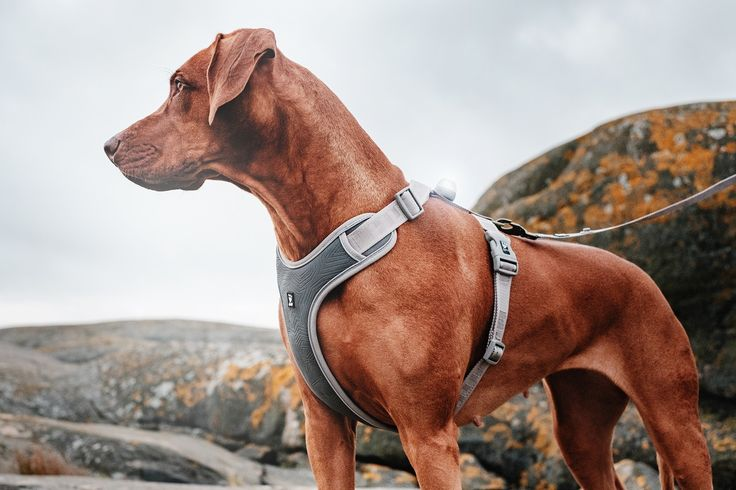 Mukavat ja turvalliset Hurtta Outdoors Adventure -koiranvaljaat auttavat lemmikkiäsi erottumaan pimeässä. / Comfortable and safe Hurtta Outdoors Adventure dog harness helps your dog to be visible in the dark.