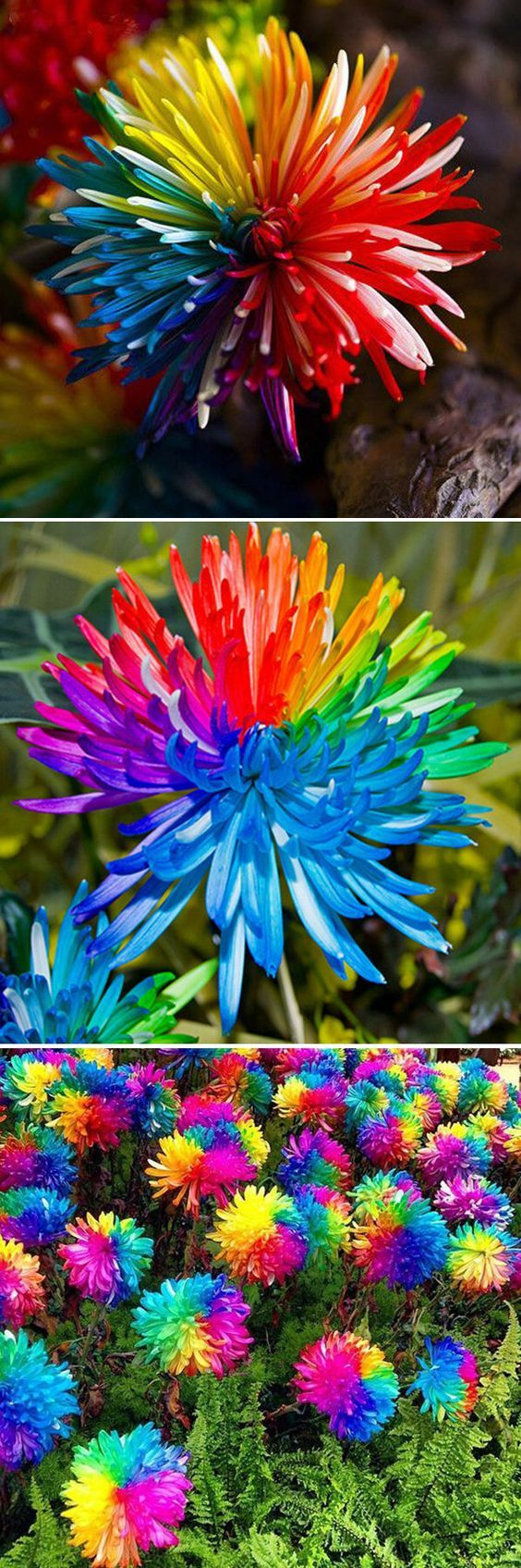 This would look so cool in a colorful fairy garden! They are rare seeds, but you could even DIY your own with some kind of paint and other flowers!