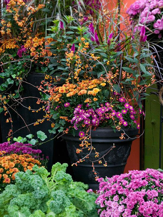 For the perfect late-season bloomer, you can't go wrong with fall mums. Get tips to selecting the right variety, planting, growing and enjoying this fall favorite.