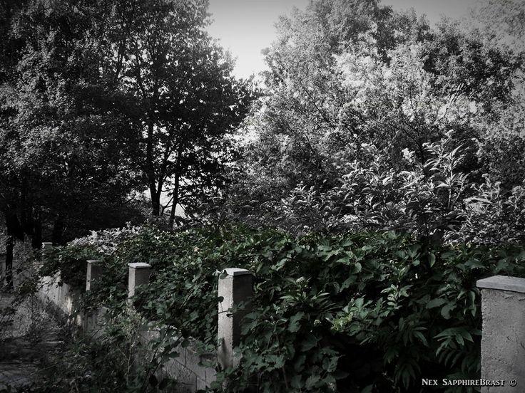 Gothic Stone Path, Ivy. Nex SapphireBrast | Photography ©