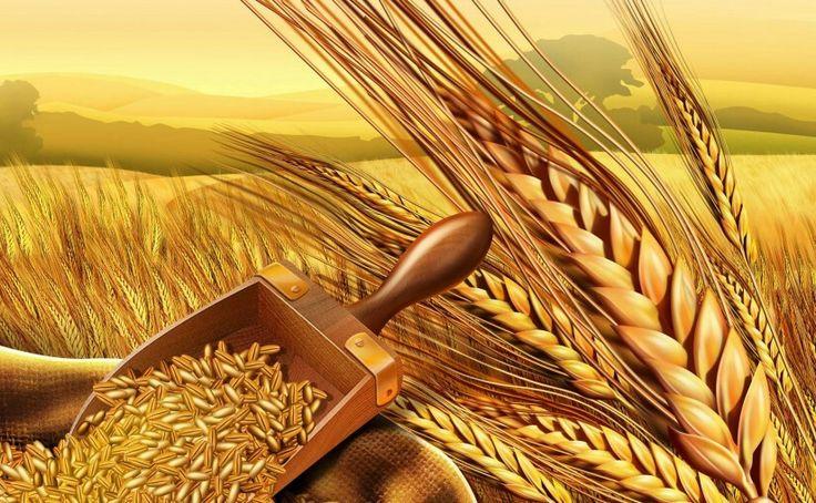 «Ο κύκλος του ψωμιού»