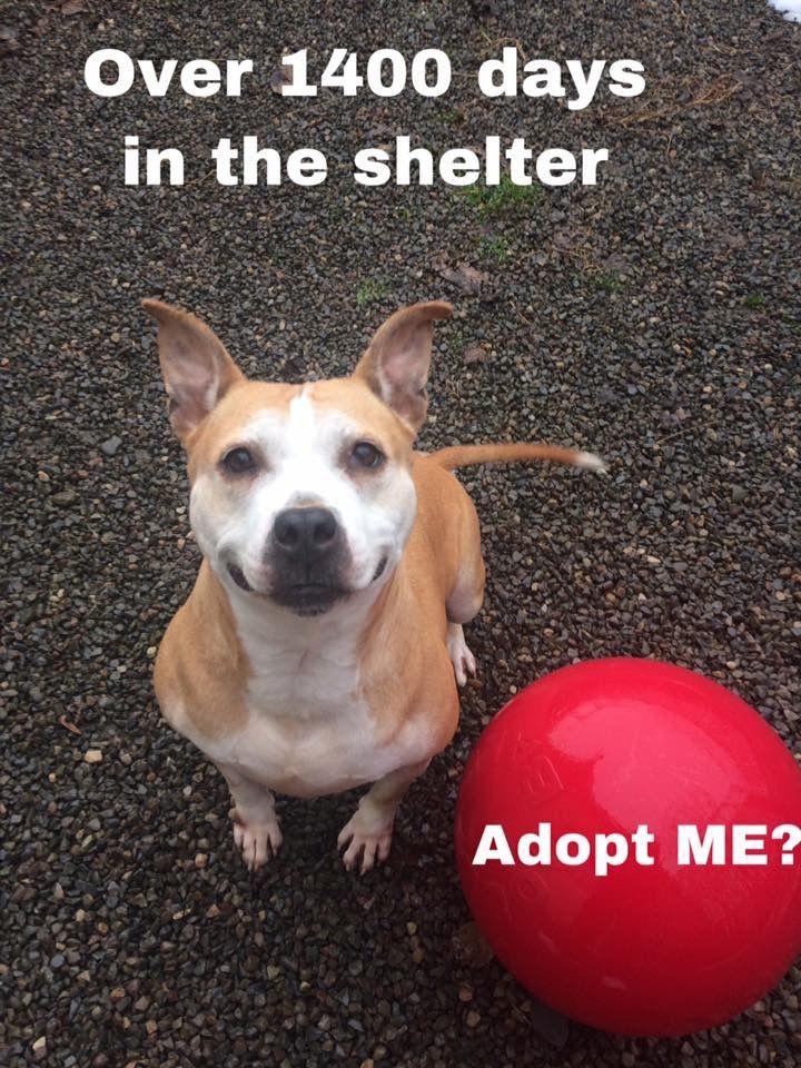Http Schuylerhumane Org Pet Profile Pet Id 32846614 Pet Id Adoption Pets