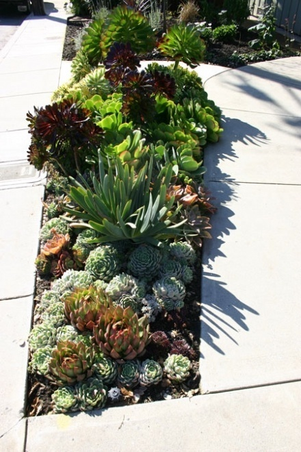 Succulent Garden  #succulentModern Gardens, Gardens Ideas, Beach House, Succulent Gardens, Side Yards, Plants, Front Yards, Gardens Design