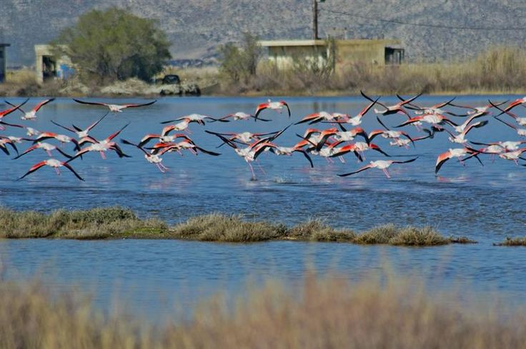 Near Tigkaki beach, there is the area of Alykes , one of the two main wetlands in Kos, where bird lovers will discover various intriguing species. The area is the largest breeding place of ruddy shelduck in Southern Europe. Learn more: http://sail-la-vie.com/discover/location/3634