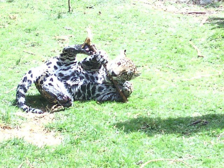 Zoologico Guatika en Boyacá Colombia