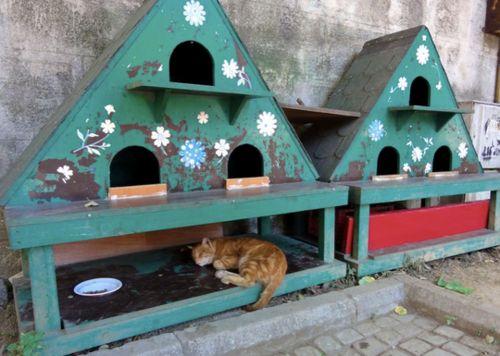 Coup de coeur : abris pour chats errants