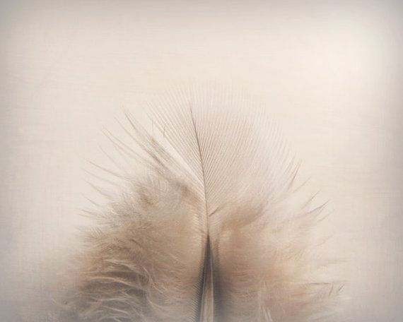 Feather Photography Neutral Pale Minimalist Home Decor 10x8 Home ... on Etsy, $25.00