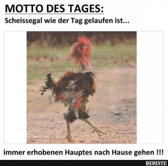 Motto des Tages   DEBESTE.de, Lustige Bilder, Sprüche, Witze und Videos
