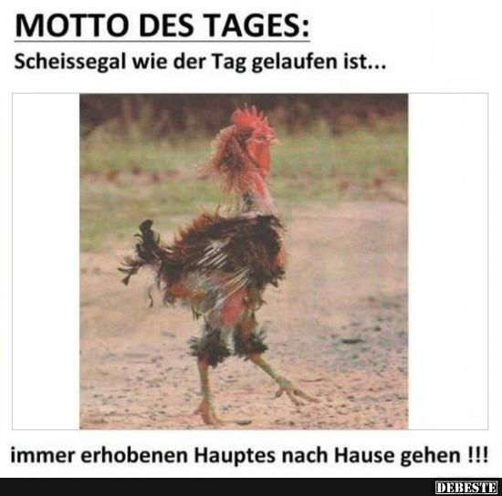 Motto des Tages | DEBESTE.de, Lustige Bilder, Sprüche ...