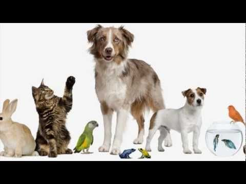 ▶ Have you got a pet? (song for children) - YouTube