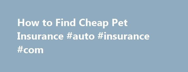 How to Find Cheap Pet Insurance #auto #insurance #com http://malaysia.remmont.com/how-to-find-cheap-pet-insurance-auto-insurance-com/  #cheap pet insurance # How to Find Cheap Pet Insurance Shares & Saves Finding cheap pet insurance does not have to be a daunting task. There are a plethora of accredited insurance plans for you and your furry friend. Pet insurance is a great thing to have for yet pet, as veterinary costs begin to sore, you need to be able to get your pet checked out for any…