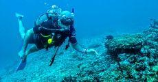 Scuba Diving Vallarta- 1 Tank