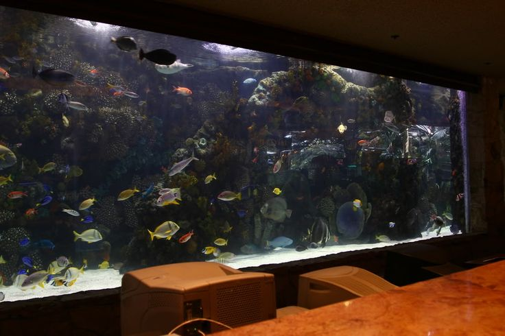 8 best images about additional scope on pinterest for Fish tank desk