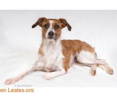 Kayli en adopción!  #Adopción #adopta #adoptanocompres #adoptar #LealesOrg  Contacto y info: Pulsar la foto o: https://leales.org/animales-en-adopcion/perros-en-adopcion/kayli-en-adopcion_i2676 ℹ  Kayli fue rescatada junto a 28 perros en un desahucio el día 8 de julio del 2017 ya está totalmente sana y esperando a encontrar un hogar.   Acerca de esta publicación:   Esta publicación NO ha sido creada por Leales.org y NO somos responsables de su contenido. Ha sido publicada gratuitamente por…